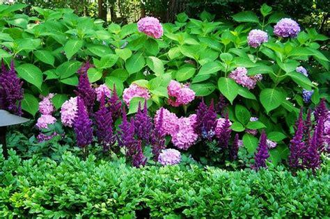 Duftige Blumen Flieder Stauden Mehrjährige Pflanzen
