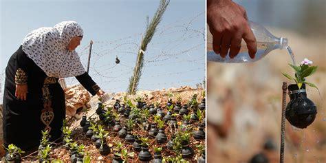 Palestinian Woman Plants Flowers In Israeli Army's Spent ...