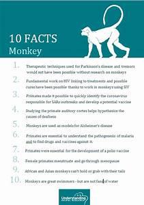 Monkey Understanding Animal Research Understanding
