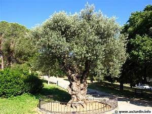Gros Pot Pour Olivier : planter un olivier ~ Melissatoandfro.com Idées de Décoration