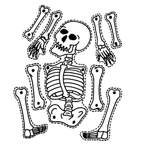 skeleton template 5 ways to teach about their cleverly changing