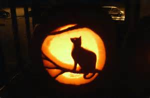 is pumpkin for cats 21 cat pumpkin carvings catster