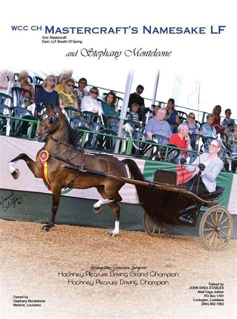 hackney pony horse ponies stepping horses saddlebred visit american