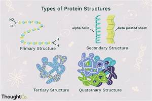 Four Types Of Protein Structure