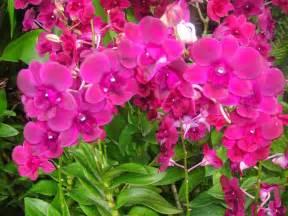 marlene bermejo ornamental plants
