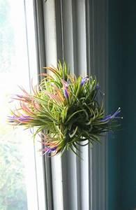 Große Zimmerpflanzen Pflegeleicht : die 25 besten ideen zu gro e zimmerpflanzen auf pinterest pflanzt pfe gro gro e ~ Markanthonyermac.com Haus und Dekorationen