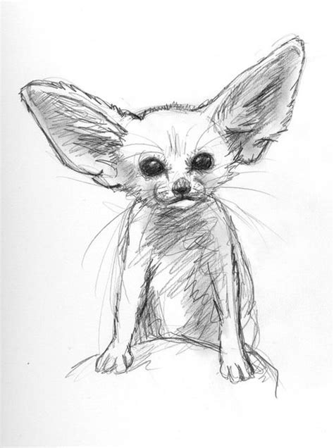 drawing illustration animals baby pencil sketch fox desert