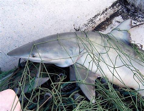 turn   tide  sharks   public image
