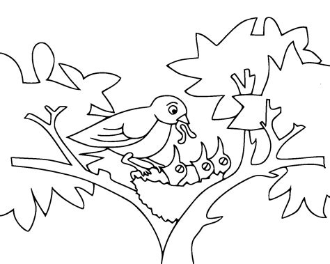 feeding birds coloring pages bird activity