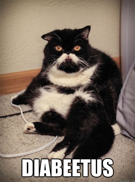 Diabeetus Cat Meme - grumpy cat would like to talk to you about diabeetus wilford brimley cat quickmeme
