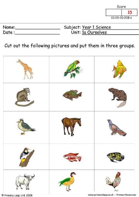 teach child   read st grade science worksheets