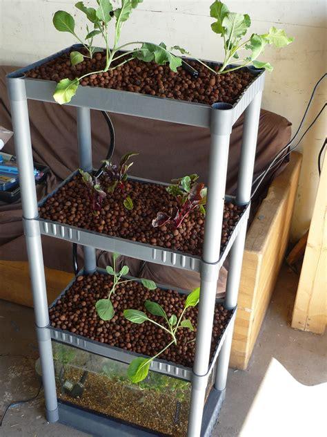 diy aquaponics system  indoor  backyard
