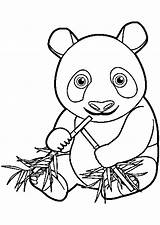 Coloring Pandas Pages Kawaii Chine Adult Colouring Printable Animals Sushi Justcolor Kleurplaat Children sketch template