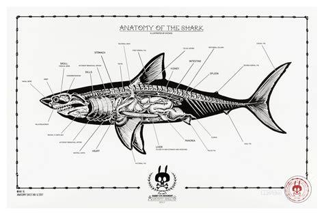 Great White Shark Diagram by Anatomy Of The Shark Anatomy Sheet No 16 Rabbit Eye