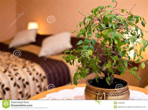 plante dans chambre à coucher plante en pot dans une chambre à coucher photo libre de