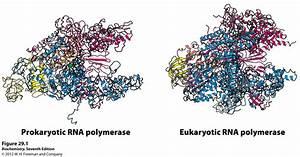 Kevin Ahern U0026 39 S Biochemistry  Bb 451  551  At Oregon State