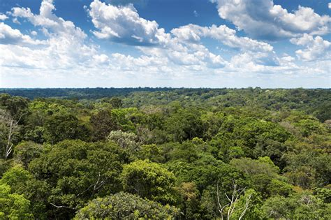 study carbon hungry plants impede growth rate