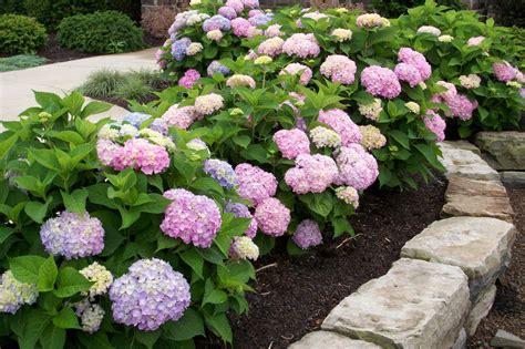 plant detail willoway nurseries