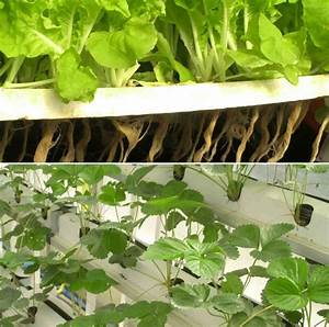 Hydroponic Setup Cost  Requirements