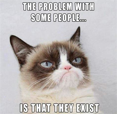 Grumpy Kitty Meme - 97 best grumpy cat images on pinterest grumpy cat animaux and funny kitties