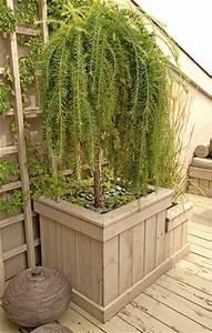 Arbuste Fleuri En Pot : pinterest le catalogue d 39 id es ~ Premium-room.com Idées de Décoration