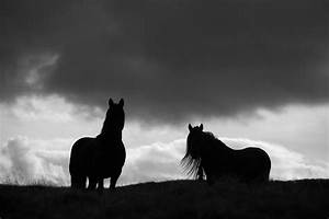 Black and white horse photo fine art photo by ...