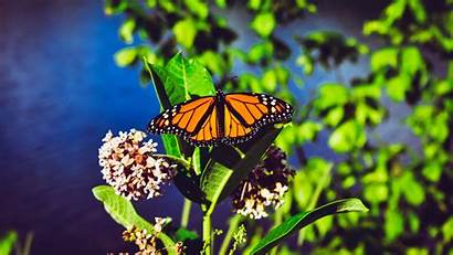 Butterfly Monarch Bright 4k Patterns Close Background