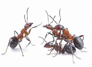 5 Common Types Of Ants In Maryland And How To Keep Them