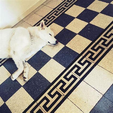 animali in ufficio b a u benessere e animali in ufficio yalp