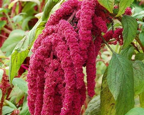 17 meilleures images 224 propos de la permaculture sur plantes comestibles livres et
