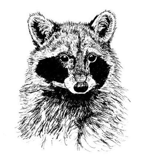 drawing animals    ink samantha bell