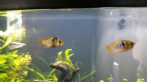 mon premier aquarium d eau douce 70 litres forum aquarium