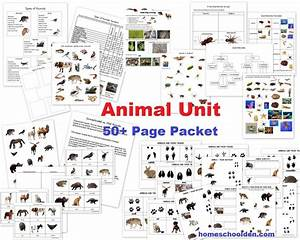Vertebrate Invertebrate Activity Freebie