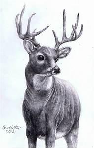 Realistic Deer by annoKat on DeviantArt
