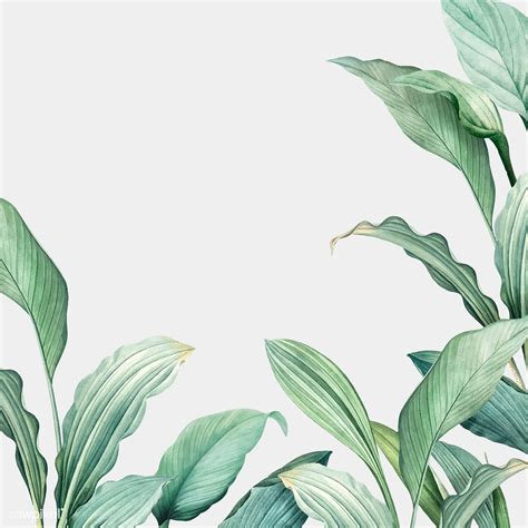 tropical leaves background royalty  stock vector