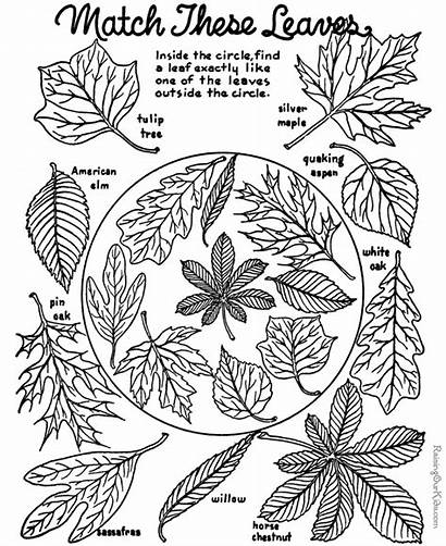 Coloring Fall Autumn Pages Leaves Sheets Sheet
