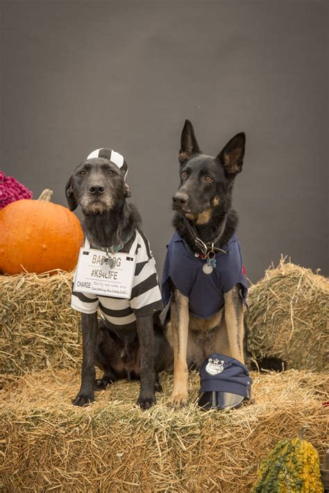Read on for all of the best deals on www.wqad.com ▼. Dogs dress up as pirates, police officers, vampires for Halloween | Fun and Entertainment ...