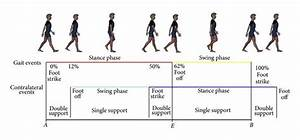 The Gait Cycle  A Schematic Representation Of Gait Cycle