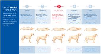 what is the average weight of a cat canine obesity a growing epidemic the national canine