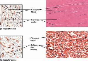 Pin Em Human Biology