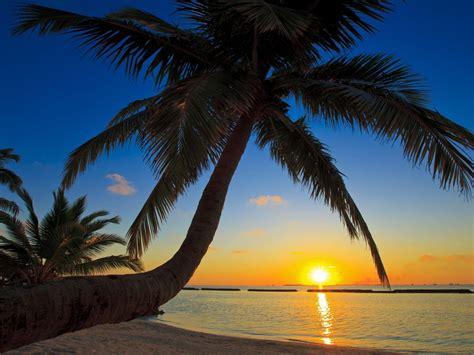 maldives beach palm sea wallpaper hd  wallpaperscom