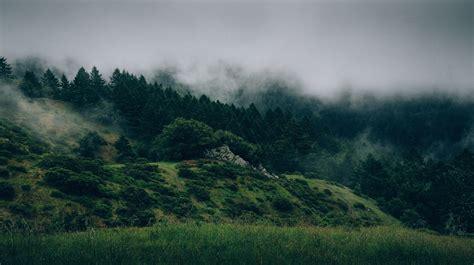 forest mist hill photography wallpapers hd desktop