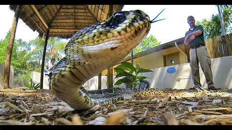 snakes florida friendly bad