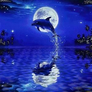 Schöne Delfin Bilder : delfin kostenlose g stebuchbilder ~ Frokenaadalensverden.com Haus und Dekorationen