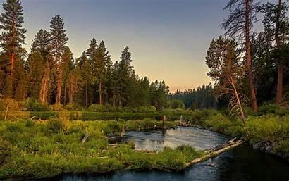 Forest Landscape Resolution Nature Lake Summer Sky