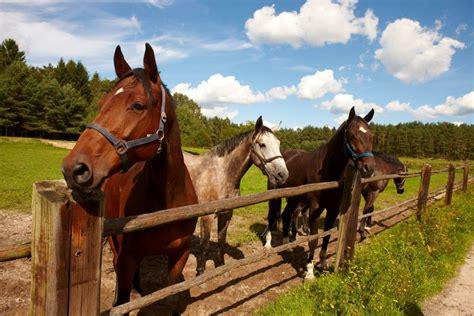 urlaub mit pferd ferienwohnungen und hotels mit