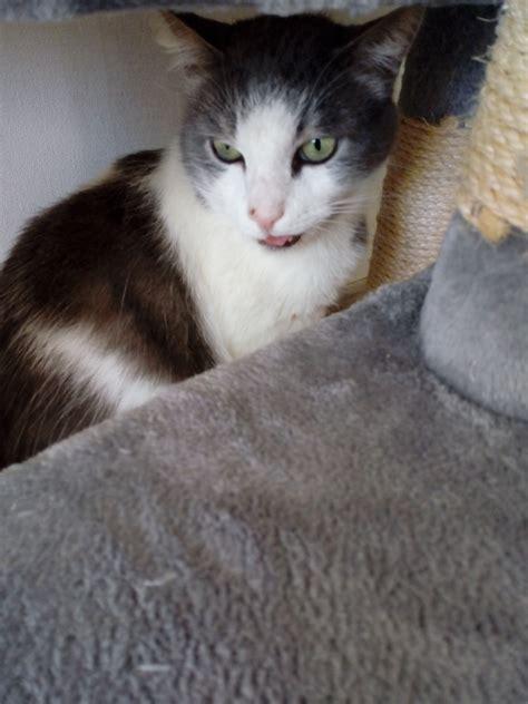 PP.lv Dzīvnieki Kaķi, kaķēni: Meklē mājas atrasts ...