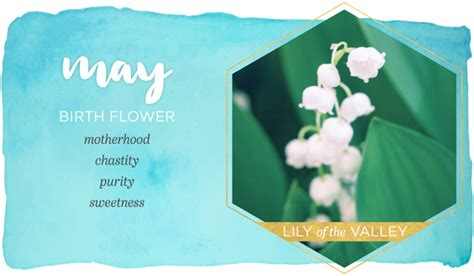 birth month flowers   meanings