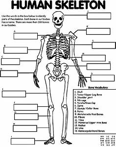 Human Skeleton Coloring Page