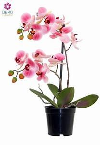 Künstliche Orchideen Im Topf : k nstliche orchidee rosa 41 cm im topf ~ Watch28wear.com Haus und Dekorationen